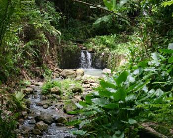 Rainforest Adventure Tour