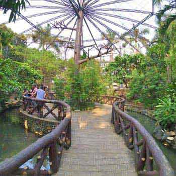 Rainforest Experience Tour