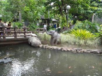 Rainforest Expedition Tour