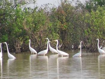 Siem Reap One Day Bird Sanctuary Tour