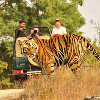 India Wildlife Safari Package