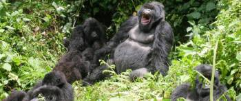 Congo & Rwanda Gorilla Safaris Package