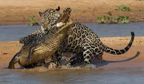 Brazil Amazon & Pantanal Tours Package