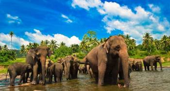 Sri Lanka Heritage 07 Days - 06 Nights Package