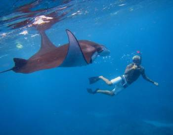 Sea Plane Trip – Swim with Manta Rays Tour