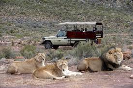 Afternoon Safari Half Day Tour