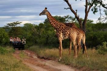 Star Safari Tour