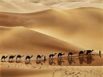Liwa Desert Safari Tour