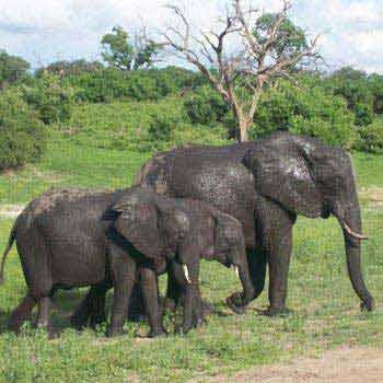 Chobe Victoria Falls Tour