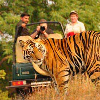 India Wildlife Tours