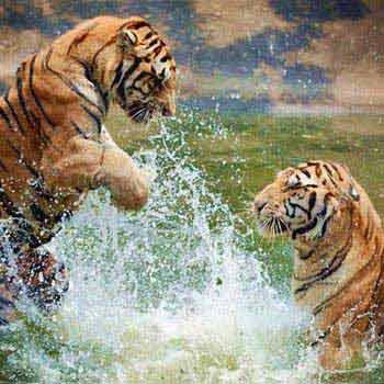 Wild & Historic Madhya Pradesh Tour