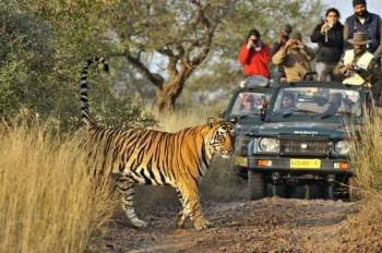 Corbett Tiger Tour Package