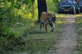 Corbett Dhikala Tour Package