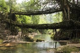 Living Root Bridges Tour