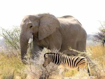 Safari and Nature Tour of Namibia