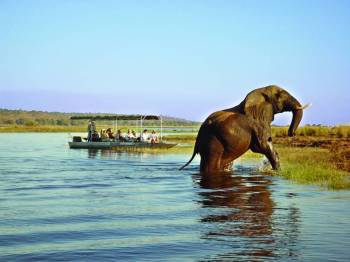 Safari and Nature Tour of Botswana