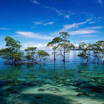 Easy Escape Andaman Tour