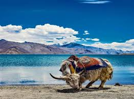 Ladakh 5n/6 Days Tour