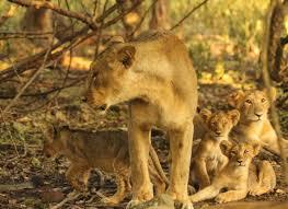 Best of Gujrat with Asiatic Lion Tour