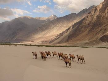 Leh-ladakh Package