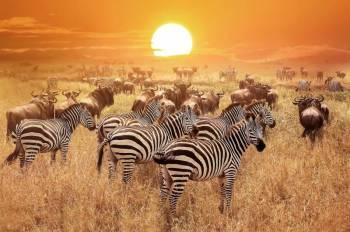 Kenya & Tanzania Tour