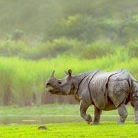 Wildlife Tour at Kaziranga National Park Package