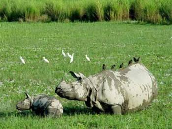 Wildlife Tour at Kaziranga National Park Tour Package