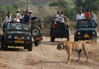 Amazing Delhi - Agra - Ranthambore - Jaipur Tour