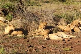 2 Nights Imbali Safari Lodge Kruger Tour Package