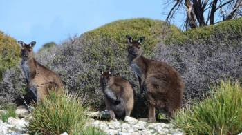 Wildlife, Outback & the Wine in South Austrailia Tour Package