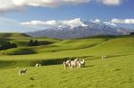 New Zealand - 100% Pure Tour