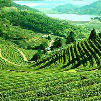 East Sikkim and Darjeeling Tour