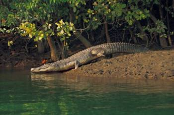 Sundarbans Forest 3 Days & 4 Nights Tour Package