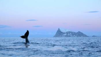 Whale Watching Tour in Tromsø Tour Package