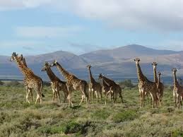 Cape Town Safari Tour Package