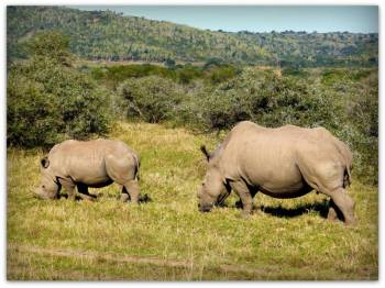 Eastern Cape Safari Tour Package