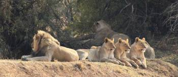 Pilansberg Safari Tour Package