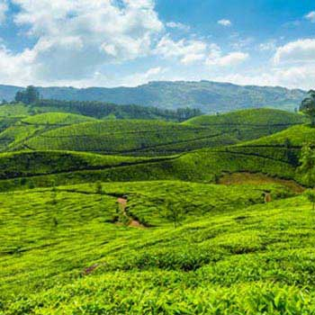 Madurai to Munnar Tour Package