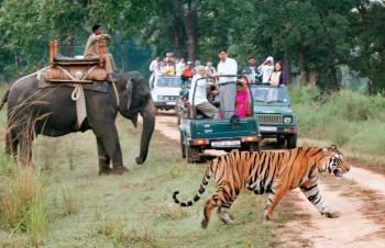 Central India - Royal and Tribal Experience Tour