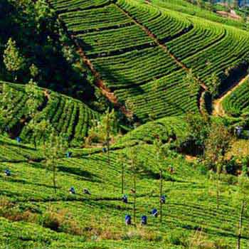 Scenic Sri Lanka Package