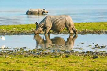 Assam, Meghalaya & Kaziranga Jungle Safari
