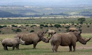 Vibrant Kenya Safari Tour