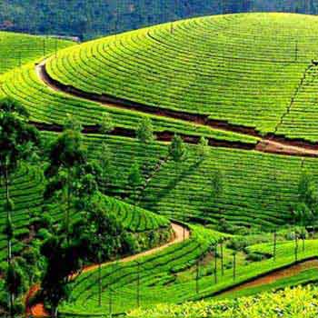 Kerala God Own Country Tour