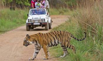Jabalpur to Bandhavgarh Tour Package