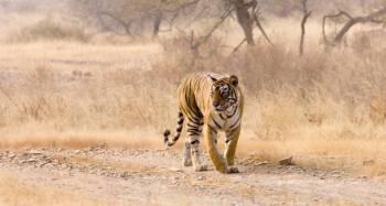Tigers & Taj Mahals Tour