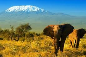 Adventure Safari Amboseli, Tsavo West, and Tsavo East National Park in Kenya Tour