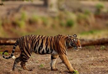 Wildlife Tour of Bastar