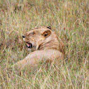 3 Days Masai Mara Tour