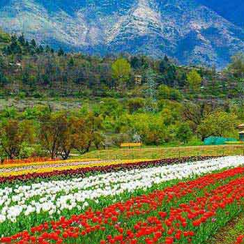 Charming Paradise Kashmir Tour