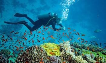 Andaman Tour - Havelock,
